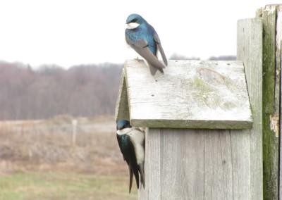Bird_2081